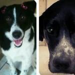 Cães um dia após serem adotados
