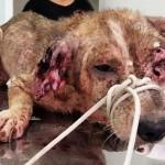 Mulher cuidará até o fim de cão com leishmaniose