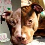 FBI considera crueldade animal como crime