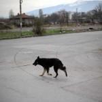 Estuprador de cão é absolvido