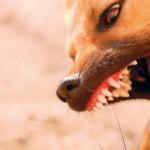 Como separar uma briga entre cachorros