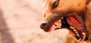 baddog-hd