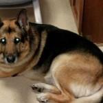 Cão que escapou de eutanásia morre
