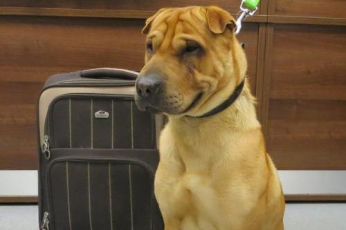 kai-cachorro-escocia-estacao-abandono-500x333