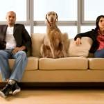 Projeto regulamenta guarda de cão em separação
