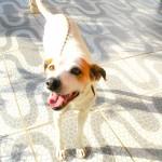 Cadela desaparecida em Canto do Forte, PG
