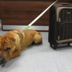 Cão é abandonado em estação de trem