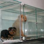 Exposição de animais em vitrines está proibida