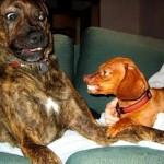 Seu cão está agressivo? Pode ser medo