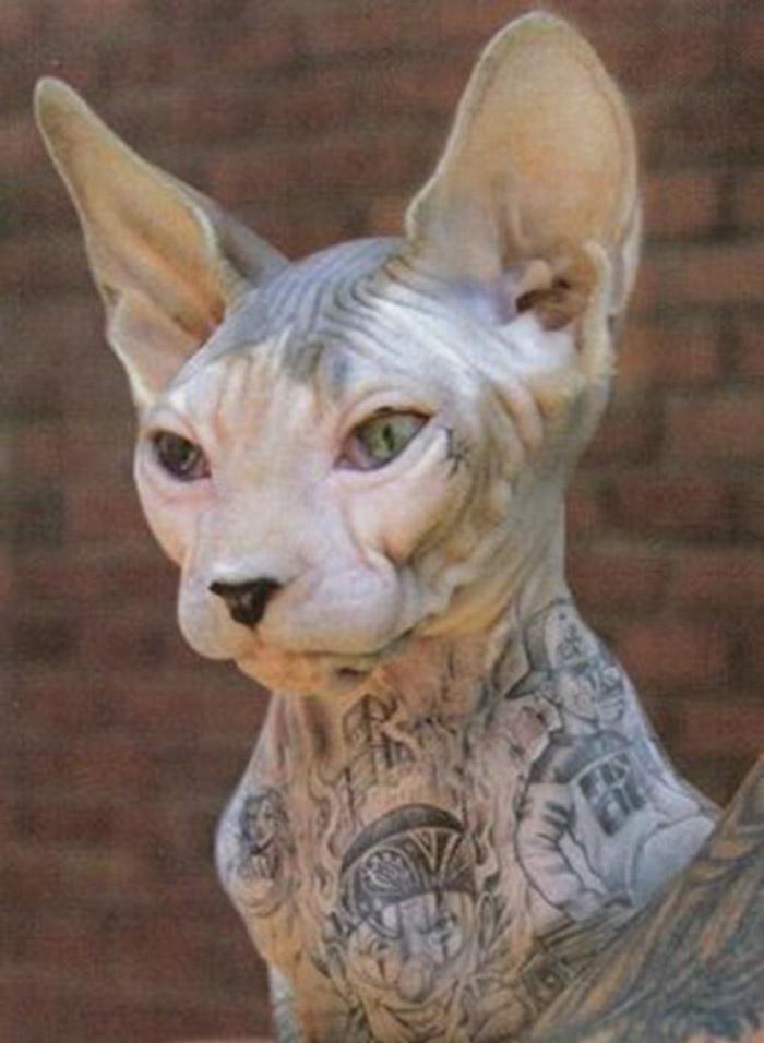 animal-tatuado-5