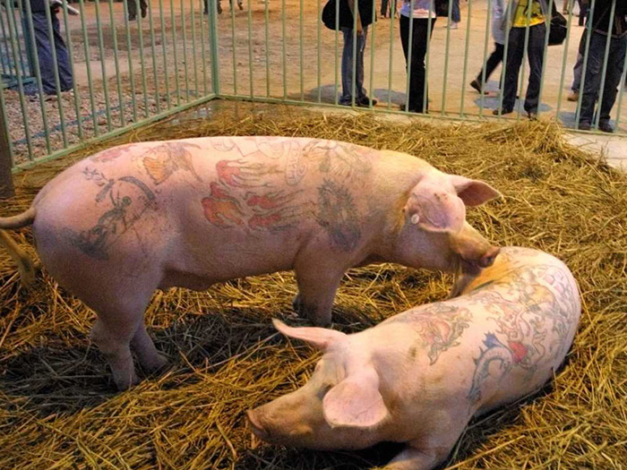 animal-tatuado-7
