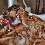 O que fazer em uma briga entre cães