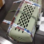 Cachorra aparece em esteira de bagagens