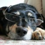 Adote um cão idoso e se surpreenda
