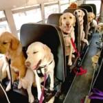 Câmara de SP aprova PL que permite animais em ônibus