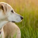 6 motivos para você adotar um cão