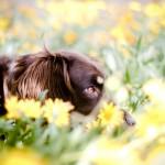 8 plantas perigosas para o seu cão