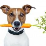 10 verduras e legumes que seu cão deve comer