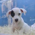 Pet shops podem expor animais em vitrine