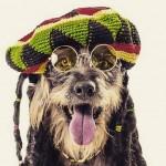 Cães passam por ensaio fotográfico para serem adotados