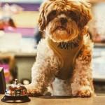 Hotel promove adoção de cães