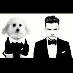 Cães e gatos que se parecem com celebridades