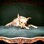 Cães que foram maltratados viram modelos