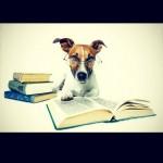 20 lições para se aprender com os cães