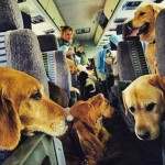 Haddad sanciona lei que permite animais em ônibus