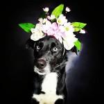 Fotógrafo incentiva a adoção de cães de cor preta