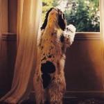 Dicas para deixar o cachorro sozinho em casa