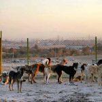 Abrigo de cães no Irã luta contra tabu religioso