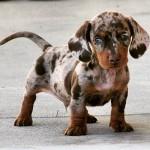Cruzamento de raças: veja que cães incríveis