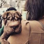 Desabafo de um cão