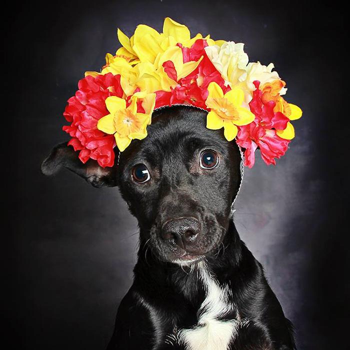 black-dog-portraits-floral-crown-guinnevere-shuster-8