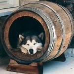Reaproveite materiais para fazer cama para o seu animal