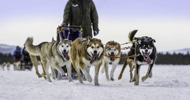 """3º lugar na categoria """"Cachorros no Trabalho"""" – Karsten Bidstrup (Dinamarca)"""