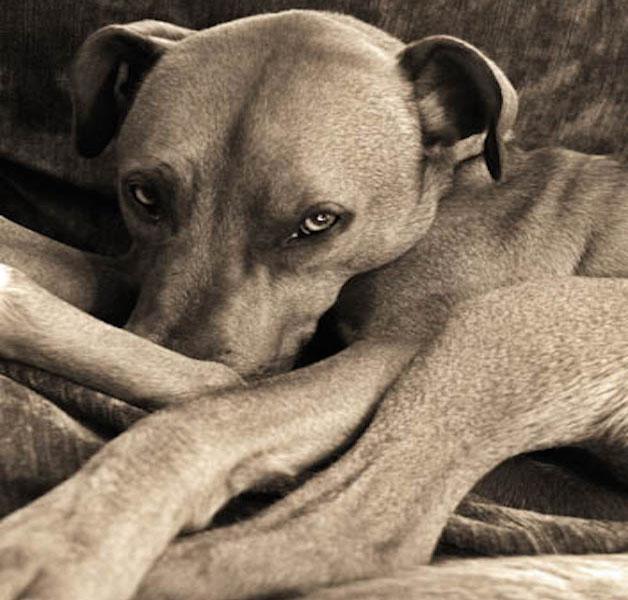 """3º lugar na categoria """"Eu amo cachorros porque…"""" – Chris Faulkner (Reino Unido)"""