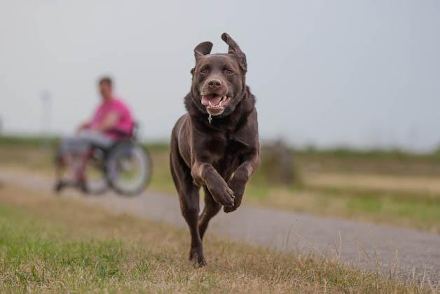 """1º lugar na categoria """"Cães de serviço"""" – Ruud Lauritsen (Holanda)"""