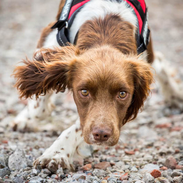 """2º lugar na categoria """"Cães de serviço"""" – Caroline Bridges (Reino Unido)"""