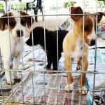 Animais esperam por adoção em São Vicente