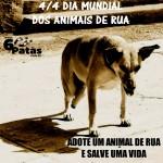 Dia Mundial dos Animais de Rua
