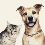 Cães e gatos: entenda a diferença entre seus donos