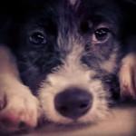 Pet shop oferece cães de graça. Entenda