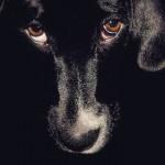 Dizem que os cães veem coisas