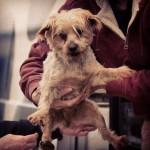 Cadelas são resgatadas de criadouros