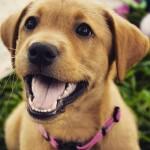 Como funciona o mecanismo de amor do seu cão