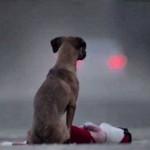 Gift: Um curta genial sobre negligência e abandono