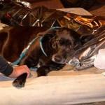 Morador de rua morre e cão fica ao lado do corpo