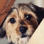 Vira-latas: os cachorros do momento